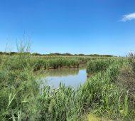 Macchiagrande: un'oasi (WWF) di pace